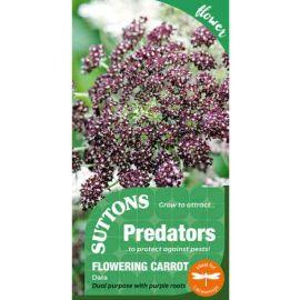 Suttons Dara Flowering Carrot Seeds