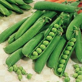 Suttons Seeds - Pea - Early Onward